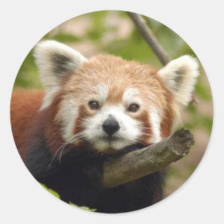 red-panda-004 pegatina redonda