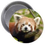 red-panda-004 pin