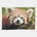 red-panda-004 toallas de cocina