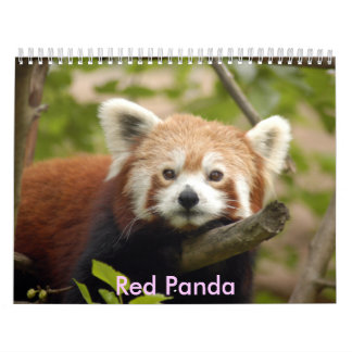 red-panda-005, panda roja calendario de pared