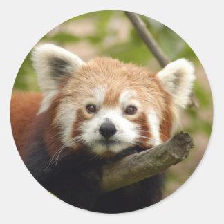 red-panda-005 pegatina redonda