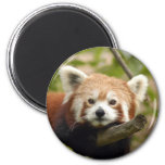 red-panda-005 refrigerator magnets