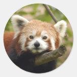 red-panda-005 round sticker