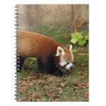 red-panda-006 libretas espirales