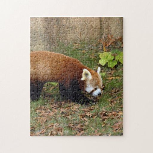red-panda-006 puzzle