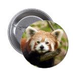 red-panda-007 2 inch round button