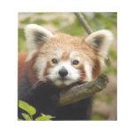 red-panda-007 libretas para notas