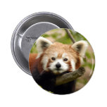 red-panda-007 pin