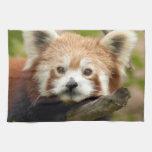 red-panda-007 toalla