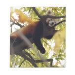 red-panda-008 libretas para notas