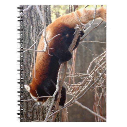 red-panda-009 cuadernos