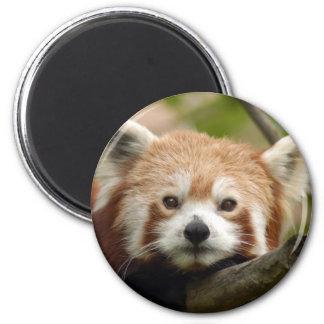 red-panda-010 imán de frigorífico