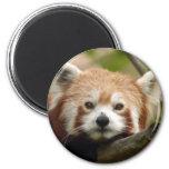 red-panda-010 magnet