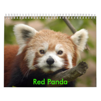red-panda-010, panda roja calendario de pared