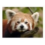 red-panda-010 postal