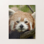 red-panda-010 puzzles