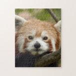 red-panda-010 rompecabezas con fotos