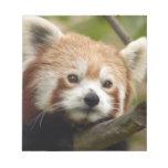 red-panda-013 libreta para notas