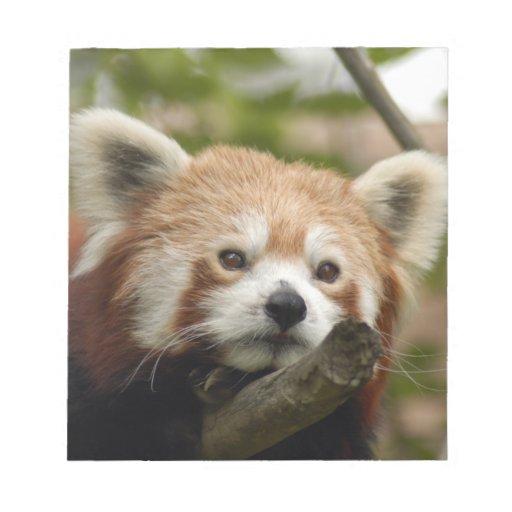 red-panda-014 bloc de papel