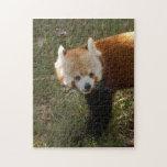 red-panda-015 rompecabeza con fotos