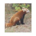 red-panda-016 libreta para notas