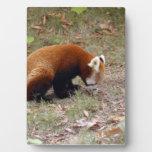 red-panda-018 placas