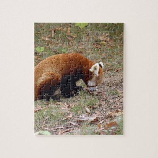 red-panda-018 puzzle con fotos