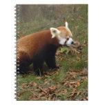 red-panda-019 libro de apuntes