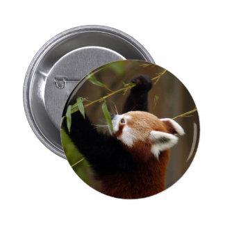 red-panda-021 pins