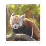 red-panda-022 blocs
