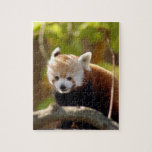 red-panda-022 puzzles