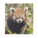 red-panda-023 libreta para notas