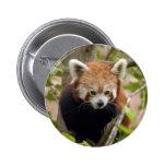 red-panda-023 pin