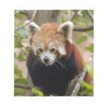 red-panda-024 bloc de notas