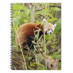 red-panda-025 libro de apuntes