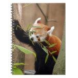 red-panda-026 libro de apuntes con espiral