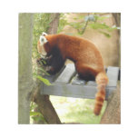 red-panda-027 blocs de notas