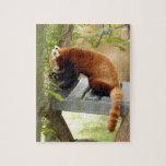 red-panda-027 rompecabezas con fotos