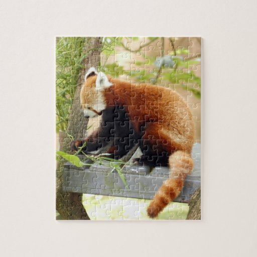 red-panda-028 rompecabeza