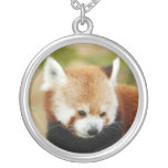 red-panda-030 grimpola