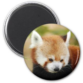 red-panda-030 2 inch round magnet