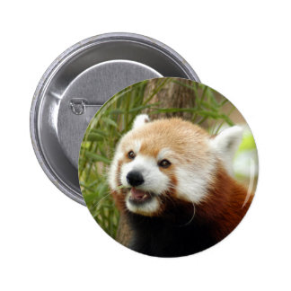 red-panda-033 pinback buttons