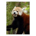 red-panda-033 greeting card