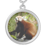 red-panda-034 collar