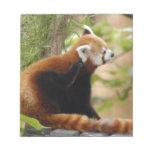 red-panda-035 blocs de papel
