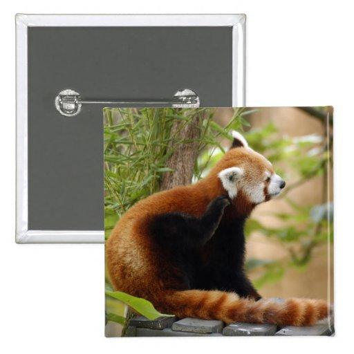 red-panda-035 pins