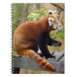 red-panda-037 cuadernos