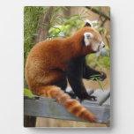 red-panda-037 placa de madera