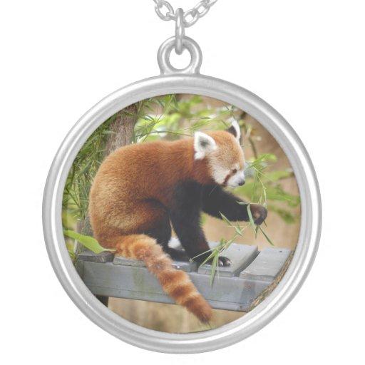 red-panda-038 grimpola