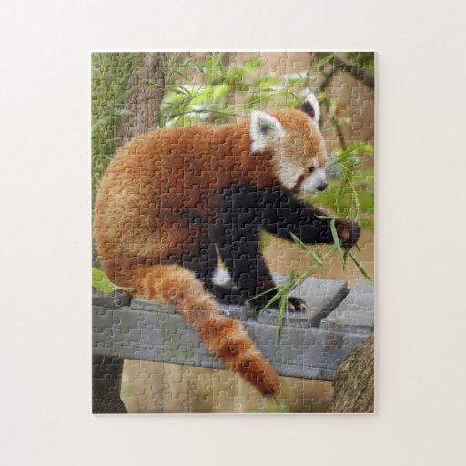 red-panda-038 rompecabeza